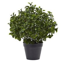 Nearly Natural 23 Inch Peperomia Plant UV Resistant Indoor/Outdoor 6859 Green