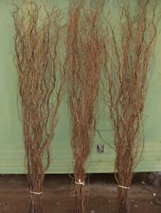 Tall twisted Willow