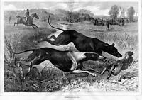 GREYHOUND DOGS COURSING FOR HARE, RABBIT HUNT, HORSES