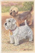 Dandie Dinmont Dog & Sealyham Terrier Dog Color Dogs Vintage Art Print 1960