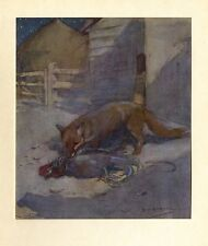Fox Thief Eating Chicken Rooster Just Killed, Vintage Color Print, Barnyard Fox