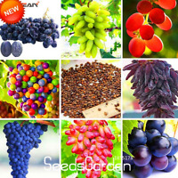 12 Kinds Grape Bonsai Fruit 100 Pcs Seeds Plants Natural Growth Sweet Kyoho NEW