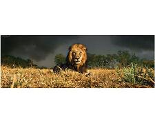 LION 1000 PIECE HEYE JIGSAW PUZZLE ALEXANDER VON HUMBOLDT