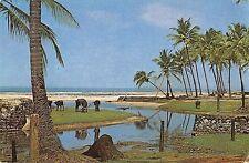 B95647 palm groved famous colva beach goa india