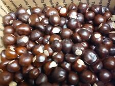 Over 500 Dried Ohio Buckeye Nuts-From Small To Large For Crafts - Ohio Grown