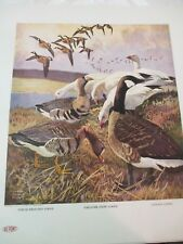 DuPont Art Print Canvas White Fronted Snow Canada Goose by Lynn Bogue Hunt 1917