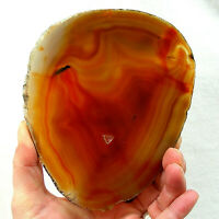Orange Agate Slice Extra Large Banded Geode Slice 14.5cm x 12cm Polished