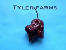 10+ Chocolate Trinidad Scorpion Pepper Seeds (organic brown chili, chile)