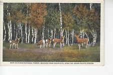 Deer in Kaibab National Forest near Cedar City Utah