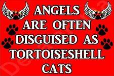 Angels Are Often Disguised Tortoiseshell Cat Fridge Magnet Gift/Present Kitten