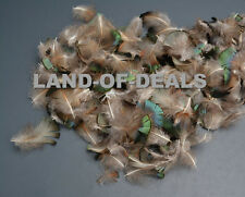200 Small Golden pheasant feathers loose green bronze iridescent .25 oz