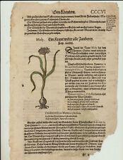 MOLY Zauberpflanze zaubern 2 Original Holzschnitte auf Textblatt um1590 Odyssee