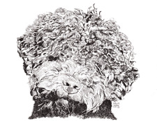 Lagotto Romagnolo Cards 10 Cards