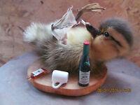 Taxidermy Duckling*Drunken Duckling*Genuine Taxidermy*UK