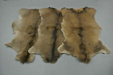 Red deer skin hide rug fur taxidermy decor Peau de cerf Pelle conciata di cervo