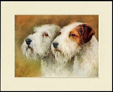SEALYHAM TERRIER DOGS HEAD STUDY LOVELY DOG PRINT MOUNTED READY TO FRAME