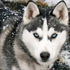 Full Drill Husky Diy 5D Diamond Painting Kits Art Embroidery Home Decors Gifts