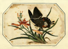 More details for antique 19th-century chinese pith painting – butterfly on orange lily flowers