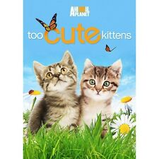 Animal Planet Too Cute Kittens