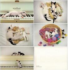 Box Completed Set lot 9 pcs CAT Kitten PC post card 1990th feline unused Italy