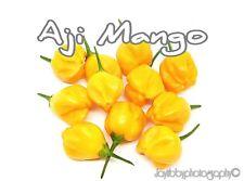 (25+) Aji Mango Pepper Seeds