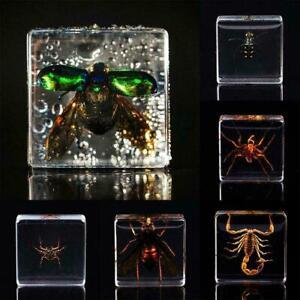 Insect figure model toys creative sample resin specimen beetle rhino U7L8
