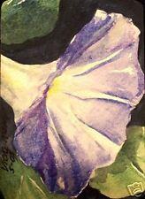 Flowers Blue Morning Glory  O/E Print   ACEO  by Vicki