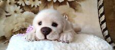 OOAK Needle Felted baby Nicole breed labrador  by artist Tatiana Bunchikova