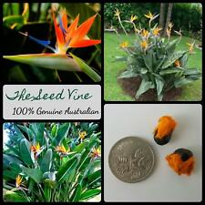 5 BIRD OF PARADISE SEEDS (Strelitzia reginae) Crane Flower Drought Tolerant