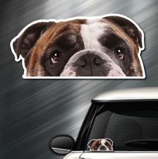 (1) BULLDOG DOG Peeper Sticker Window Peep Decal Car Auto Puppy AKC 3.5x7.25 NEW