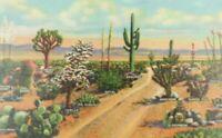 Various Species Of Cactus As Seen On The Desert Linen Vintage Postcard