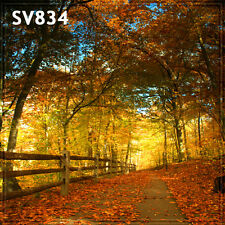 FALL 10x10 FT CP (COMPUTER PRINTED) PHOTO SCENIC BACKGROUND BACKDROP SV834