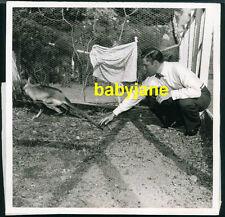 ERROL FLYNN VINTAGE 8X8 PHOTO CANDID W/ WALLABY IN 1943 SNIPE ON BACK