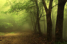 Framed Print - Wooded Misty Winding Path (Picture Poster Woods Forest Art)