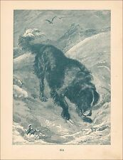 St. Bernard Dog Discovers Body in Snow, Antique Engraving, Print 1890