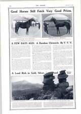 1910 Gemelli Siamesi Colorado buoni CAVALLI Fetch buoni prezzi
