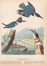 "1942 Vintage AUDUBON BIRDS #132 /""ARCTIC 3 TOED WOODPECKER/"" Color Art Plate Litho"