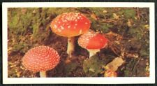 Fly Agaric #24 Woodland Wildlife 1980 Brooke Bond Card (C2143)