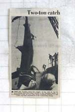 1975 20 Foot Basking Shark Caught By St Ives Fishing Boat Harvester, Plummer