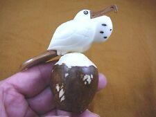 (TNE-BIR-FR-4) Frigate Man of war pirate bird TAGUA NUT figurine carving birds