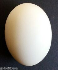 EGGS-ACTLY EGG made in SOLID or with HOLE FOR LOADING