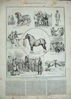 Old Antique Print 1886 Shire Horse Show Royal Agricultural Islington Hall 19th