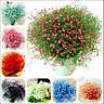 Gypsophila Paniculata 100 PCS Seeds Bonsai Pink Stars Flowers Home Garden Mixed