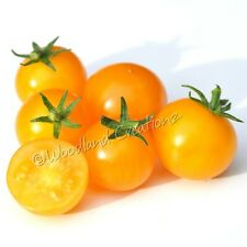 Orange Hat Tomato Seeds Micro Dwarf Plants New Organic Heirloom