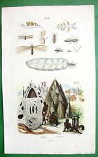 TERMITES Nests Sea Slugs - SUPERB H/C Color Antique Print