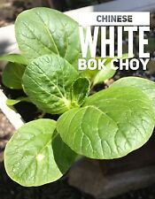 RARE✿ 2017 NEW! Heirloom Chinese White Bok Choy Seeds 50+ ● Great Flavor