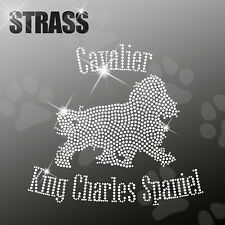 Cavalier King Charles Spaniel M1 CANE APPLICAZIONE FERRO STIRO hotfix 22cm