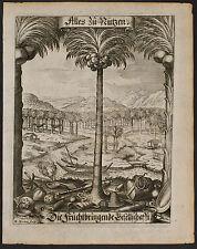 Merian - Frontispiece - Palm Tree -3 - 1646 Fruchtbringenden Botanical Engraving