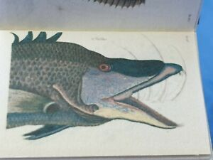 1:12 Scale Book, 2 x Volumes, Georgian Zoology, 1717 Crafted by ken Blythe