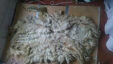 1.2kg Raw Sheeps Fleece Texel X Welsh Spinning Weaving Stuffing Insulation 62A
